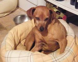 Les Truffes en vacances : Pension d'animaux - Dog sitting