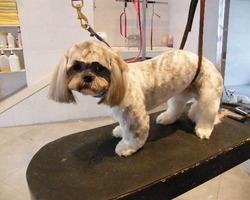 Les Truffes en vacances : Pension d'animaux - Toilettage
